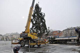 Новогоднюю ель установили на центральной площади Уссурийска