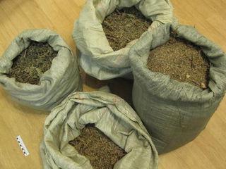 Почти 100 килограммов марихуаны изъяли приморские наркополицейские в первые дни нового года