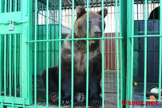 Бесплатное посещение экспозиции диких животных в Уссурийске продлено еще на месяц