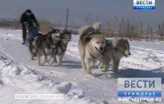 В заснеженном Уссурийске провели собачьи гонки
