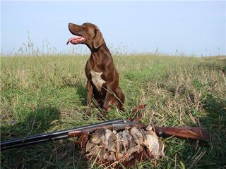Весенняя охота на птиц в Приморье начнется в конце марта