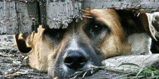 В Уссурийске проверят ряд кафе на предмет торговли блюдами из мяса собак