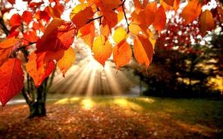 В Уссурийске в октябре ожидается похолодание и первые заморозки