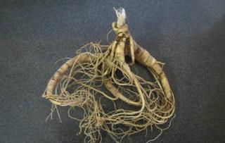 Уссурийская таможня задержала корни женьшеня