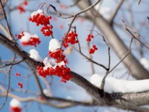 Погода в Уссурийске в феврале будет переменчива