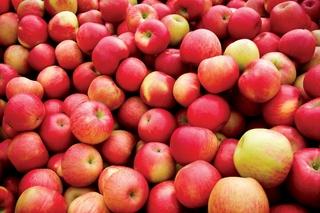 Более 9 тонн запрещенных фруктов изъято в Уссурийске
