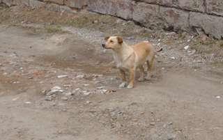 В Уссурийском городском округе организован отлов безнадзорных животных