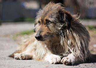 В с. Раковка выявлены и уничтожены собаки с заболеванием бруцеллез