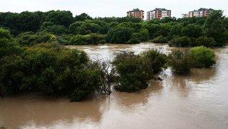 Зоопарк под Уссурийском временно закрыли из-за подтопления