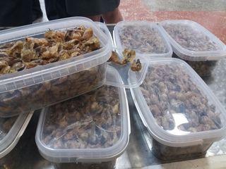 Крупную партию жира лягушек задержали уссурийские таможенники