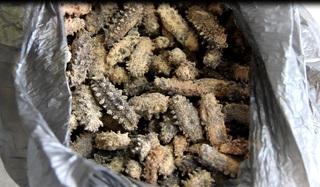 Уссурийская таможня задержала 7 кг трепанга