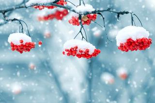 Во время новогодних каникул в Уссурийске ожидается снег