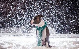 Синоптики обещают снегопад в новогоднюю ночь в Уссурийске