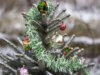 В Уссурийске ёлки для новогодних базаров рубили на кладбище