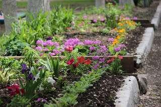 Около 160 000 цветов украсили клумбы Уссурийска в этом году