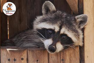 Поможем открыть ветеринарный кабинет в зоопарке «Чудесный»!