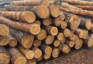 Крупную партию леса без карантинных сертификатов пытались вывезти из Приморья в Хабаровский край