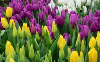 В Уссурийске пройдет «Ярмарка цветов»