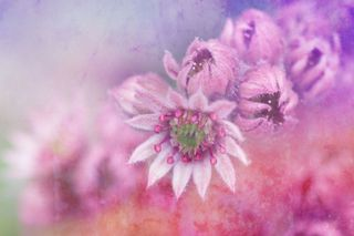 Краевая выставка женщин-художников «Цветы весны» откроется 6 марта в Уссурийска