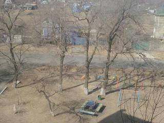 Почти 200 аварийных деревьев будет снесено в Уссурийске в этом году