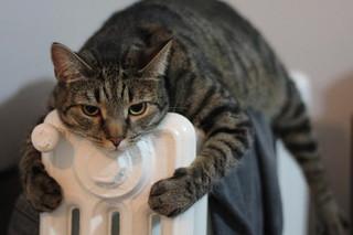 Все котельные Уссурийска начали подавать тепло в жилые дома и социальные учреждения