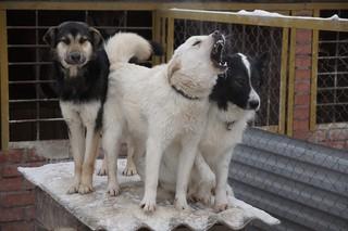 «Вонзала зубы в коляску»: в Уссурийске бездомная собака напала на женщину с младенцем
