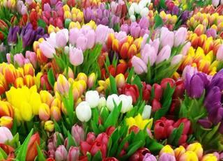 Специализированная ярмарка «Ярмарка цветов» в Уссурийске