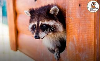 В одном из зоопарков Приморья случился бэбибум