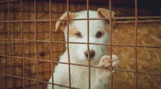 Кадры разделанных собак распространили в приморских соцсетях