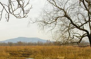 Браконьеров с ценными деревьями поймали в Приморье