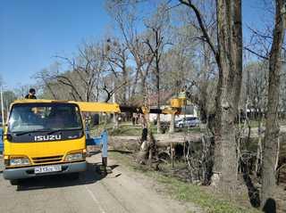 В Уссурийске продолжаются работы по уходу за зелеными насаждениями