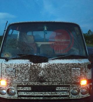 В Приморье на трассе автомобиль атаковала «туча» насекомых
