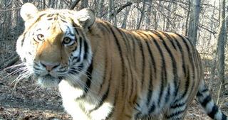 Постоянно действующая экспедиция РАН по изучению животных Красной книги РФ и других особо важных животных фауны России