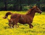 В селах Уссурийского округа участились кражи лошадей