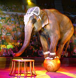 Реконструкция уссурийского цирка завершится к 2013 году