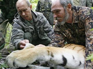 Владимира Путина обвиняют в смерти амурской тигрицы