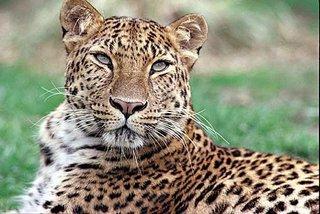 Начал действовать национальный парк, созданный для охраны диких животных