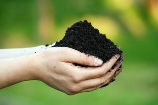 Содержание тяжелых металлов в почве Приморья составило 82,1% в 2011 году