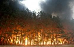 Разгорается Уссурийская тайга