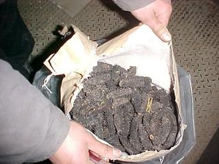 Более 200 кг трепанга задержали уссурийские таможенники