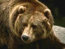 На корм медведей ушло 140 килограммов заражённых среднеазиатских фруктов