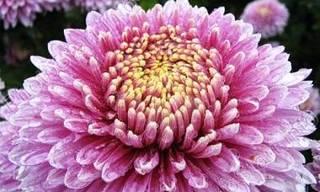 Зараженные цветы хотели продавать в Приморье