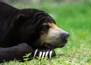 Уссурийские таможенники задержали китайца, пытавшегося вывезти желчь медведя